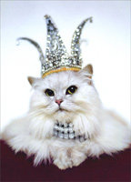 CARD EVERY DAY YOU SPARKLE BUT TODAY YOU RULE