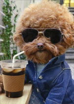 CARD COFFEE SHADES CHILL